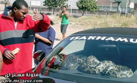 اكسسورات سيارة